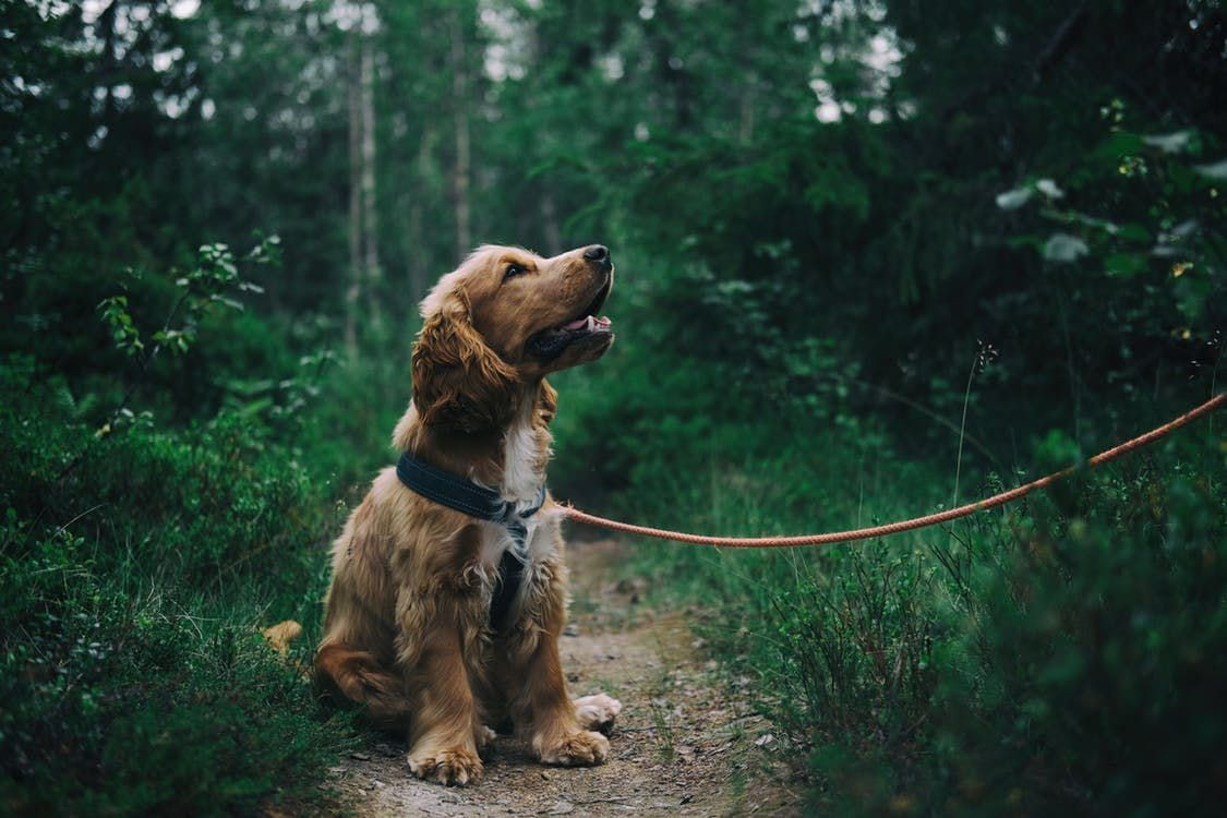 Read our top tips for dog walks in Somerset and keeping you dog happy and safe